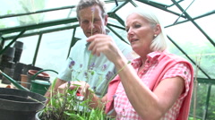 Slow Motion Shot Of Middle Aged Couple Working In Greenhouse Stock Footage
