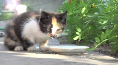 kitten drinking milk, animal, hd - stock footage