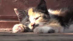 Kitten sleeps, animal, HD Stock Footage