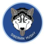 head of siberian husky with long shadow - stock illustration