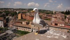 Bird perched on stone with view of city behind it Stock Footage