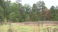 Country field unkept fall daytime wide shot Stock Footage