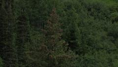 Aerial flying up forest mountain side 4K 366 Stock Footage