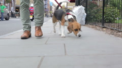 Dog Being Taken For Walk Along City Street Stock Footage