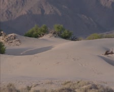 Pan - Death Valley Sand Dunes in Stovepipe Wells area with vegetation Stock Footage