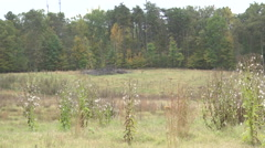 Country field unkept fall daytime xtra wide shot Stock Footage