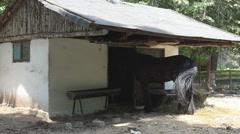 Hevonen Istuu Stall, Barn Stable vuonna Village Maaseutu, maanviljely, maaseutu Arkistovideo