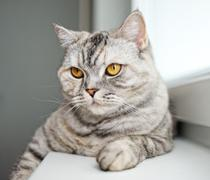 Close-up of a beautiful cat Stock Photos