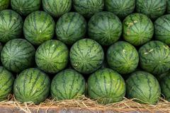 Watermelon set in a row on straw Stock Photos