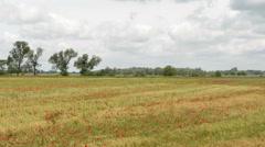Poppy field landscape Stock Footage