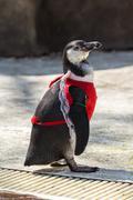 Stock Photo of penguin