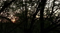 sun through wood branches. Time lapse HD Footage