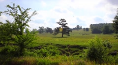 Rolling Green Hill of the Shire Stock Footage