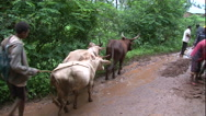 Stock Video Footage of car stuck on muddy road, Rural Africa