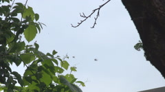 Swarm of bees near a tree and vine moving fast, flies restlessness, agitation Stock Footage