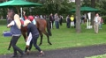 4k Jockey get on his racing horse 4k or 4k+ Resolution