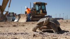 Desert Tortoise Walking Stock Footage