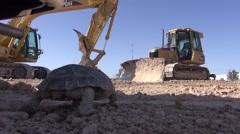 Desert Tortoise Walking, Construction Site Stock Footage