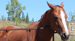 Horse with Head Over Fence Canada Stock Footage