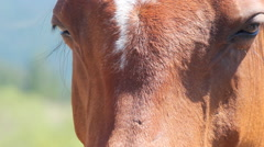 Horse Face and Nose Closeup Stock Footage