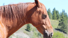 Docile Horse British Columbia Canada - stock footage