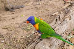 Parrot on the old log Kuvituskuvat