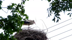 Stork standing in the nest. Stock Footage