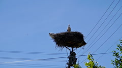 Stork in the nest on telephone pole. Stock Footage
