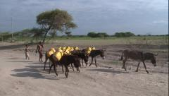 Donkeys transporting water on dirt road - stock footage
