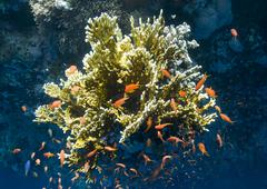 Colorful tropical coral reef buzzing with small fish. Stock Photos