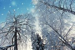 snowy trees in the snowfall - stock photo
