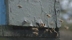 Bees enter hive close 2 Stock Footage