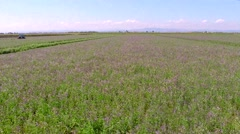 Aerial view of Alfalfa field Stock Footage