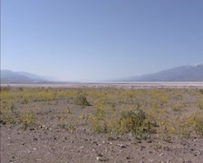 Death Valley: Yellow carpet of Desert Dandelion in front of the salt area Stock Footage