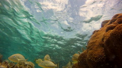 Yellow Grunts Fish School pass through frame extreme close up - stock footage