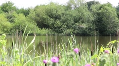 Close up from a lake idyll Stock Footage