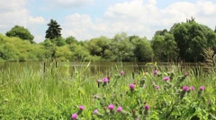 detail shot from a lake idyll - stock footage