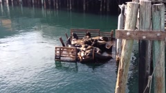 Sea Lions in Monterey California Stock Footage