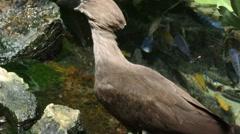 1902 Tropical Bird, HD Stock Footage