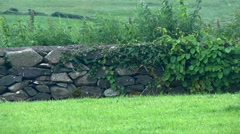 Stone wall and farm fields in Ireland. Stock Footage