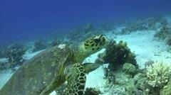 Turtle & clown Stock Footage
