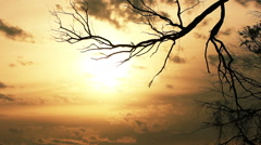 branch of  tree and  beautiful  sky with clouds. Time lapse - stock footage