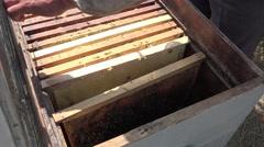 Honeycombs in beehive, garden, 4k Stock Footage