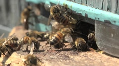 Bees in front of beehive, insects, garden, HD Stock Footage