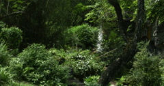 1908 Waterfall in the Tropics, 4K Stock Footage