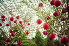 Lanterns hanging from trees in greenhouse Stock Photos