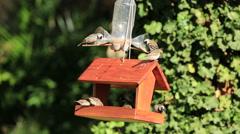 Wild garden birds feeding Stock Footage
