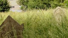 Pan of a meadow overgrown tall grass with scattered, neglected tombstone 2 Stock Footage