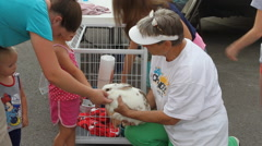 Rabbit petting at the street fair Stock Footage