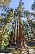 The bachelor and three graces, mariposa grove, yosemite Stock Photos